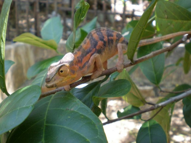 Madagascar425.jpg