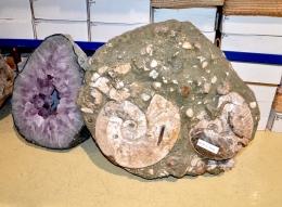 Ammonit in Matrix