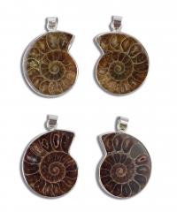 Ammoniten Anhänger