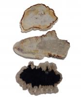 Versteinertes Holz Scheiben